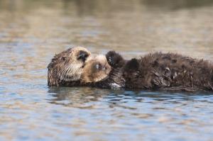 Sea-otter-bay_11